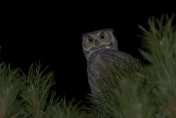 Whooo's Out There? | Outside My Window