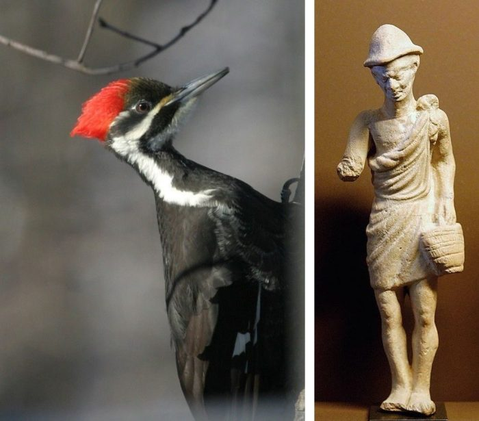 Let's Get Pileated | Outside My Window