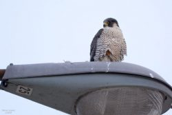 Raptor News Around Town | Outside My Window