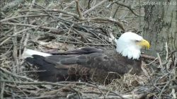 Hays Bald Eagle Nest Watch