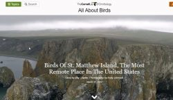 The Birds on St. Matthew Island – Beautiful Birds Blog