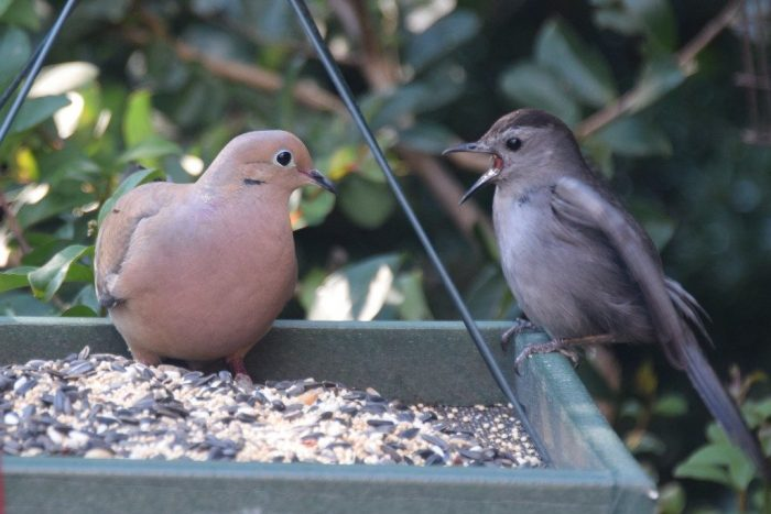 A Little Dispute At The Feeder