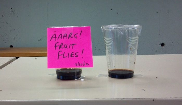 Annoyed By Fruit Flies? | Outside My Window