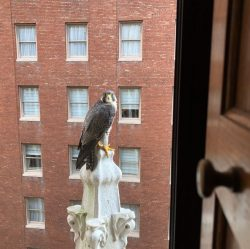 Seen Downtown This Week   Outside My Window