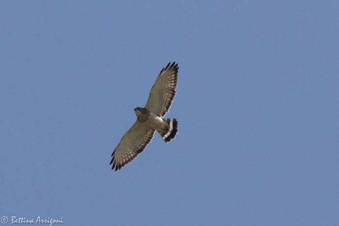 From Broad Wings to Red Tails
