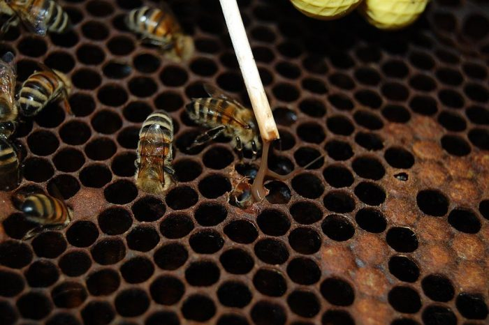Heads Up Pittsburgh Beekeepers: Foulbrood Alert!