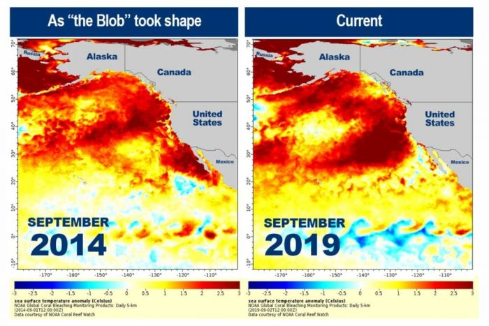 Is The Blob Back Again?