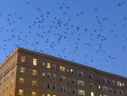 Where is Pittsburgh's Crow Roost?