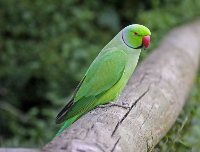 From Parakeets to Jelly Beans