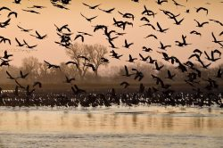Cranes: The Great Migration | Outside My Window