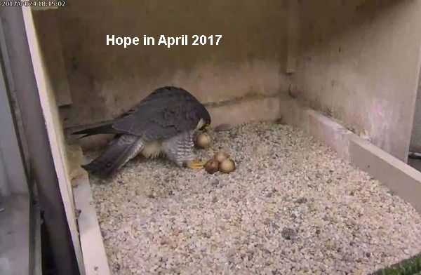 Caution For Hatch Day 2019