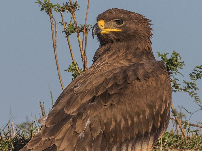 Eagle-Sized Roaming Charges | Outside My Window